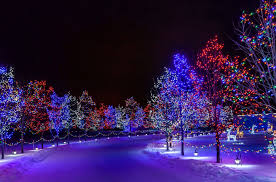 town park road tree illumination snow winter new