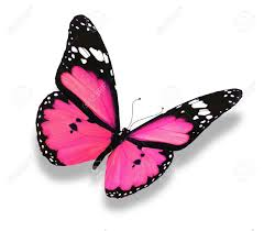 image 12203692 pink butterfly isolated on white stock photo