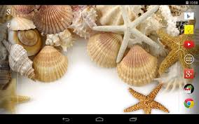 sea shells live wallpaper android apps on google play