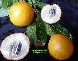 What Fruit Trees Grow In Texas - fruit tree descriptions
