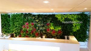 living walls miami interior plant service u0026 office plant leasing
