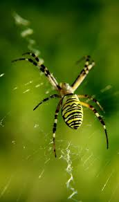 45 best a spider u0027s images on pinterest spiders insects and nature
