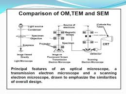 name one advantage of light microscopes over electron microscopes scanning electron microscopy