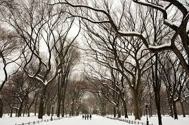 in the treetops a winter gift the new york times