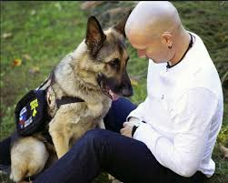 Comfort Dog Certificate Free Service Dog Registration Free Service Dog Certification