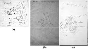 a 2b and 2c charles darwin tree of sketch from notebook b