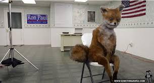 Taxidermy Fox Meme - taxidermy nightmares part 1 of 2