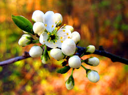 99 best think spring images on pinterest spring flowers and