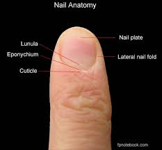 10 interesting facts about nail health