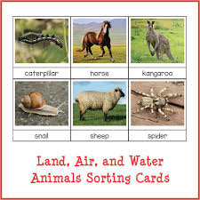 land air and water animals sorting cards gift of curiosity