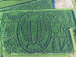 Pumpkin Farms In Wisconsin Dells by North America U0027s 9 Best Corn Mazes To Visit Koa Camping