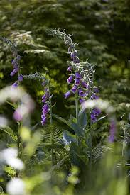 10 shade garden ideas to steal from an english woodland gardenista shade garden idea foxgloves bowood britt willoughby dyer