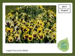 bureau plus 2017 national garden bureau s yearofthepansy
