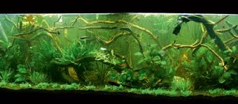 Aquascape Inspiration Your Tanks Jessica Leebelt U2014 Practical Fishkeeping Magazine