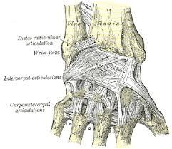 Foot Ligament Anatomy Carpometacarpal Joint Orthopaedicsone Articles Orthopaedicsone