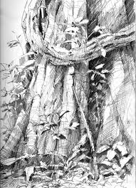 in panama drawing a tree drawing the motmot