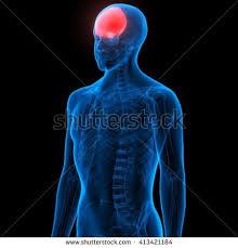 Human Anatomy Skull Bones Human Skull Bone Pains 3d Stock Illustration 413421217 Shutterstock