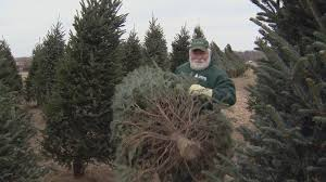 growing trees for seasonal holiday is a year round job wisconsin