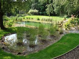 Backyard Swimming Ponds by 146 Best Natural Swimming Pools Images On Pinterest Natural