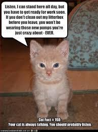 Talking Cat Meme - dealing with rejection broken mirrors