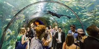 9 kid friendly new orleans attractions marriott traveler