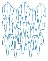 design inspiration the secrets of shark skin www