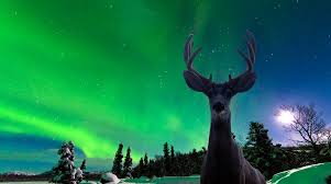reykjavik iceland northern lights iceland northern lights golden circle 3 nights only 419