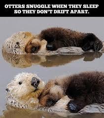 Snuggle Meme - otter