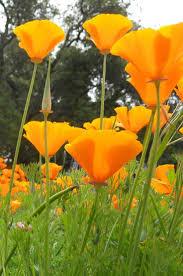 brisbane native plants 39 best my plant pallet images on pinterest pallets native