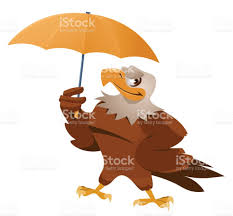 bad weather funny american eagle with umbrella stock vector art