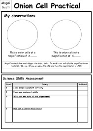 onion cells microscope skills and worksheet by danielle21711