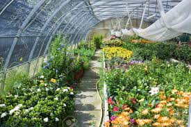 nursery of flowers and plants for garden in greenhouse stock photo