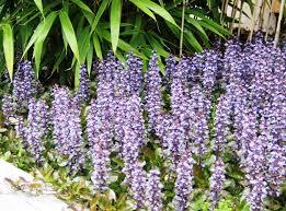 Flower Area - ten perennial groundcovers dengarden