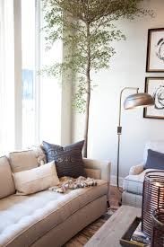 our five favorite house plants u2013 alice lane home interior design