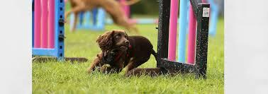 dog barn banbury funky foundations devon dogs