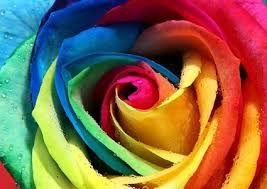 color roses all color flowers free stock photos 72 933 free