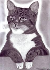 imagenes a lapiz de gatos dibujo hiperrealista gato a la espera l comprar dibujos