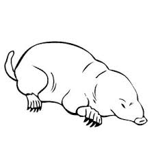 mammals coloring pages animal kingdom mole coloring pages batch coloring