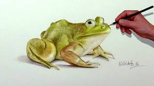 how to draw a frog with simple colored pencils youtube