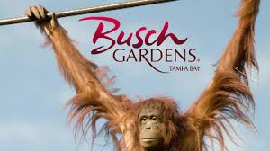 Busch Gardens Family Pass Animals Busch Gardens Tampa My Home State Pinterest