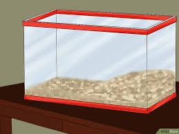 Pleins De Crabe Violonistes Très Comment Prendre Soin De Crabes Violonistes 11 é