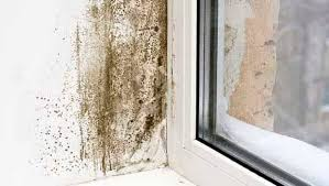 Mould Bedroom Ceiling How To Get Rid Of Black Mould In Your Bedroom Independent Ie