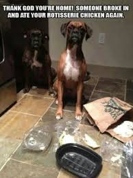 boxer dog in boxing gloves stay gorgeous my friends boxer dogs pinterest dog animal