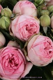premium garden rose bridal piano