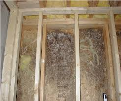 Mold Growing In Bathroom Mold In Your Home