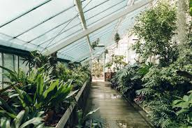 inside the greenhouse at dyffryn gardens in cardiff greenhouses