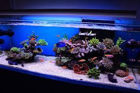 saltwater fish tank ideas 5362