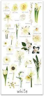 wedding flowers names best 25 june wedding flowers ideas on june wedding