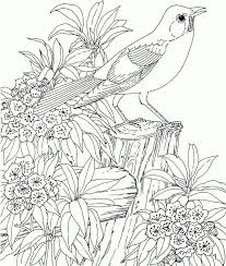 868 best coloring pages images on pinterest coloring books