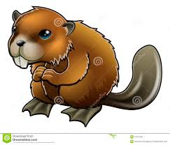 beaver clipart adorable pencil and in color beaver clipart adorable